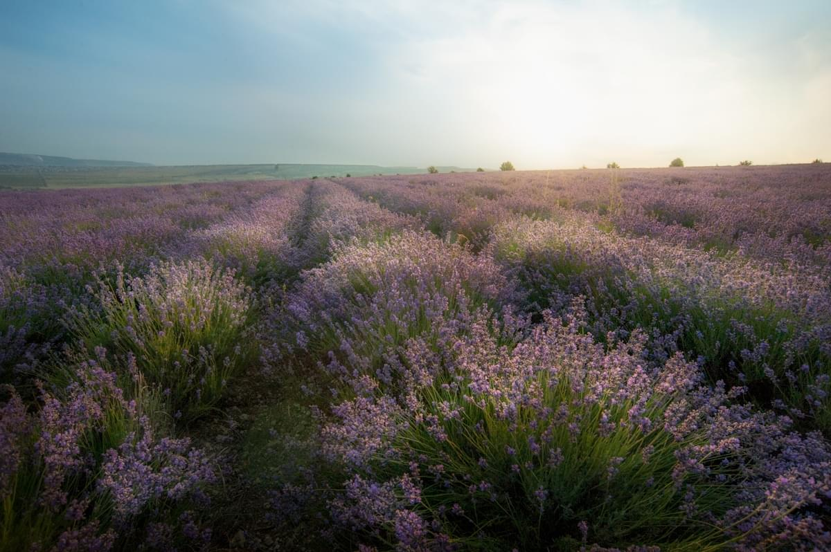 Photo tours of the Crimea - sunset landscape - lavender fields in Turgenevka